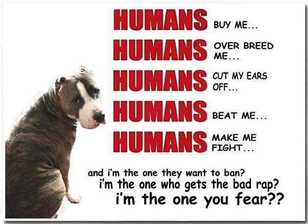 no breed specific legislation