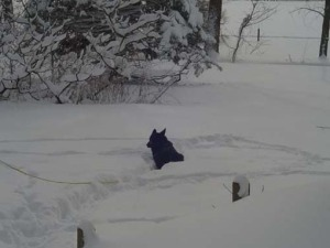 Neka loved the cold. She looked forward to going out and laying in the snow.