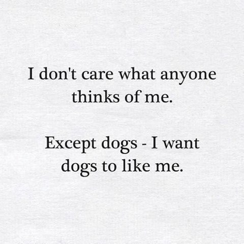 what-dogs-think-of-me