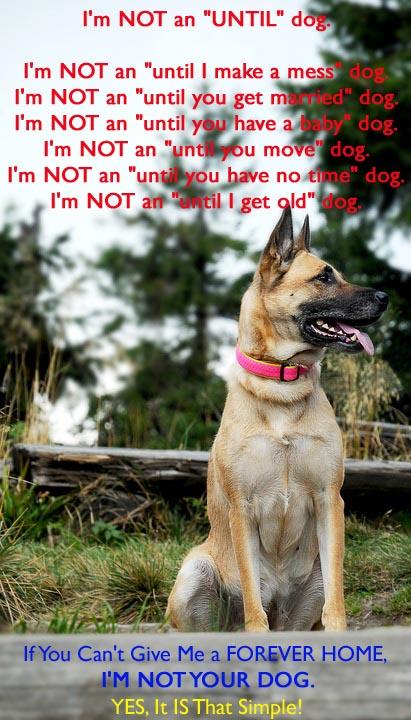 A Better Dog 4U